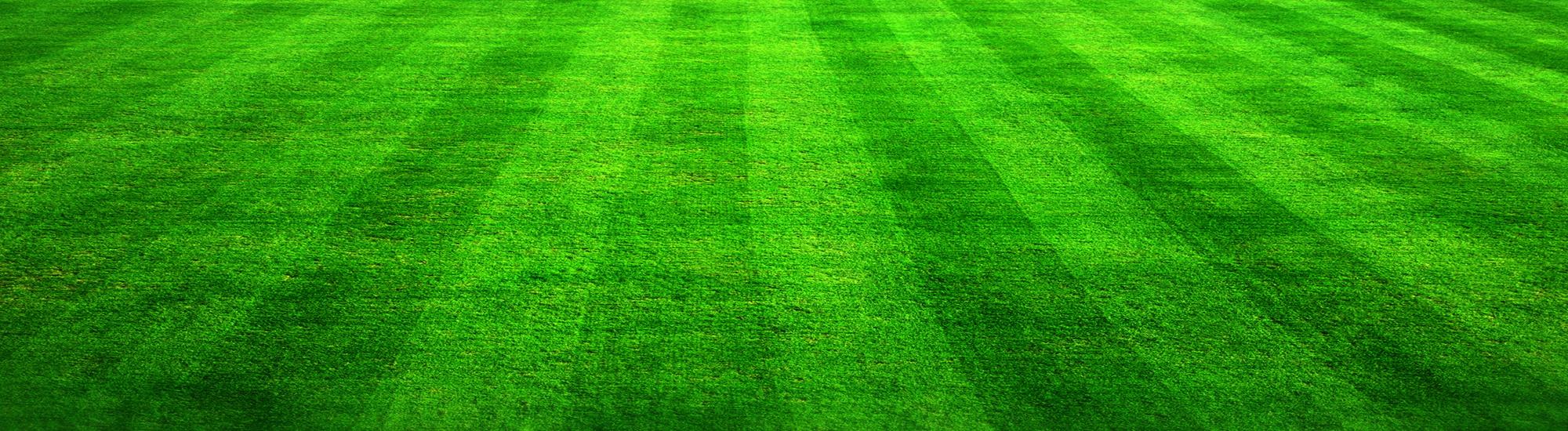 bg_grass_3